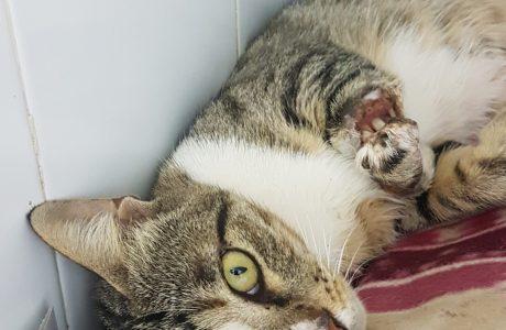 חייה של חתולת רחוב