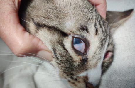 איך סירוס פשוט הפך למקרה עיניים מורכב?