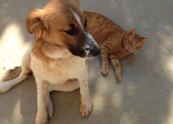 תזונת כלבים וחתולים